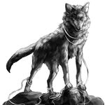 Fenris Wolf.JPG