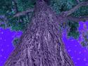 BIG STRONG TREE