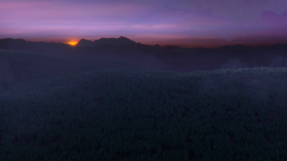Unendlicher Wald