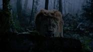 6x18 Lion Poltron cachette racine souche tronc d'arbre grognement