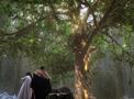 Portal-Baum der Weisheit.png