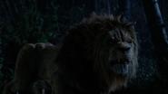 6x18 Lion Poltron apparition grognement