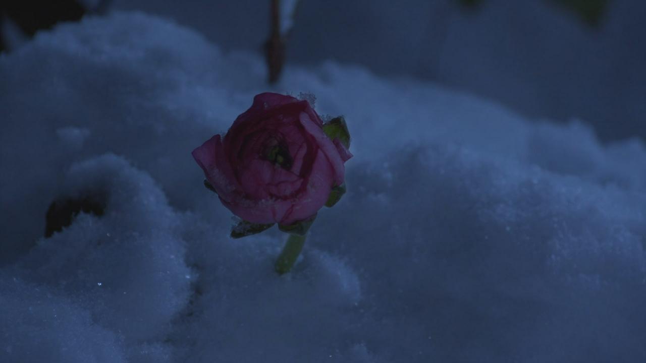 Fleurs de fée