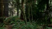 4x21 Forêt de Saules arbres