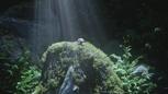 5x03 champignon magique plant rocher couronne cramoisie forêt de Brocéliande.png
