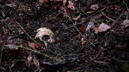221Skull