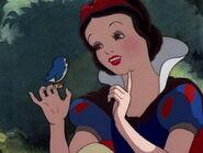 DSnowWhiteBluebird