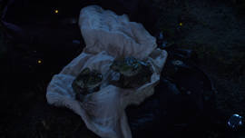 705FrogCouple.png