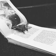 IGglidersonset-OnceUponATimeBook-2