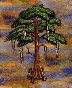 Bald Cypress Tree.jpg