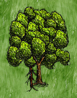Maple Tree(branch).jpg