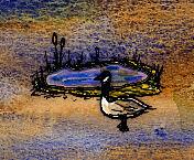 Canada Goose Pond.jpg