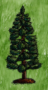White Pine Tree with Needles