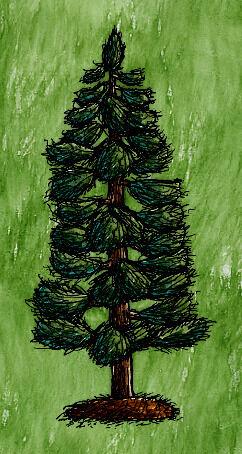 White Pine Tree with Needles.jpg