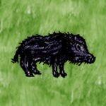 Domestic Boar.jpg