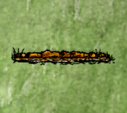 Shallow Tilled Row.png