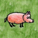 Domestic Pig.jpg