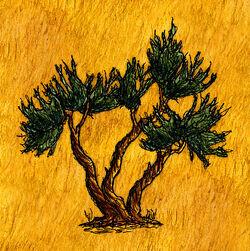Juniper Tree.jpg