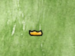 Wooden Shoe.png