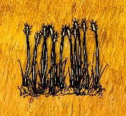 Ripe Wheat.jpg