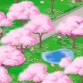 Field sakura.png