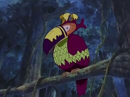 Un Ocell del Sud