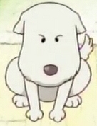 Chouchou as a Puppy