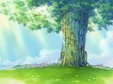 Adam - drzewo skarbów