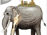 Animal Species/Four Emperors Saga