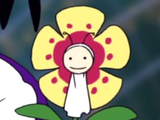 Lily Carnation
