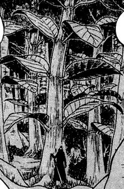 Дерево Кона
