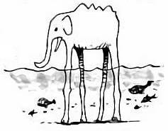 Виды животных/Сага Ёнко