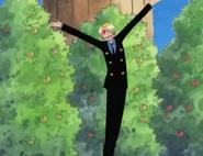Nami's Mikan Trees
