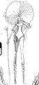Charlotte Marnier Manga Concept Art.png
