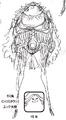 Charlotte Citron Manga Concept Art.png