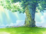Árvore do Tesouro Adão