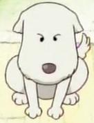 Shushu cucciolo