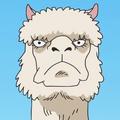 Alpacacino