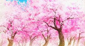 Sakura Anime Infobox.png