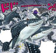 Whale sharks.jpg