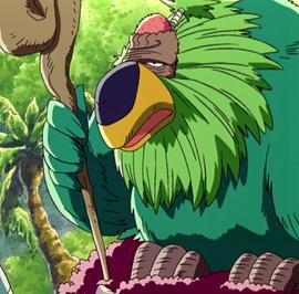 Bald Parrot Anime Infobox.png