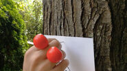 Edgy-Oobi-hand-puppets-Art-tree