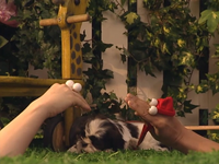Oobi-Kako's-Puppy-opening