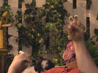 Oobi-Kako's-Puppy-drying-off