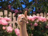 Oobi-Garden-Day-thumbs-up
