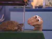 Oobi-Playdate-Oobi-and-his-turtle
