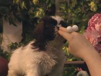 Oobi-Kako's-Puppy-playing