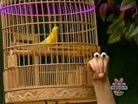 Oobi-shorts-Bird-Uma-sad