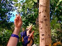 Oobi-Nature-Walk-tree