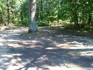 Bild 5 Waldweg ab Ruppiner Chaussee